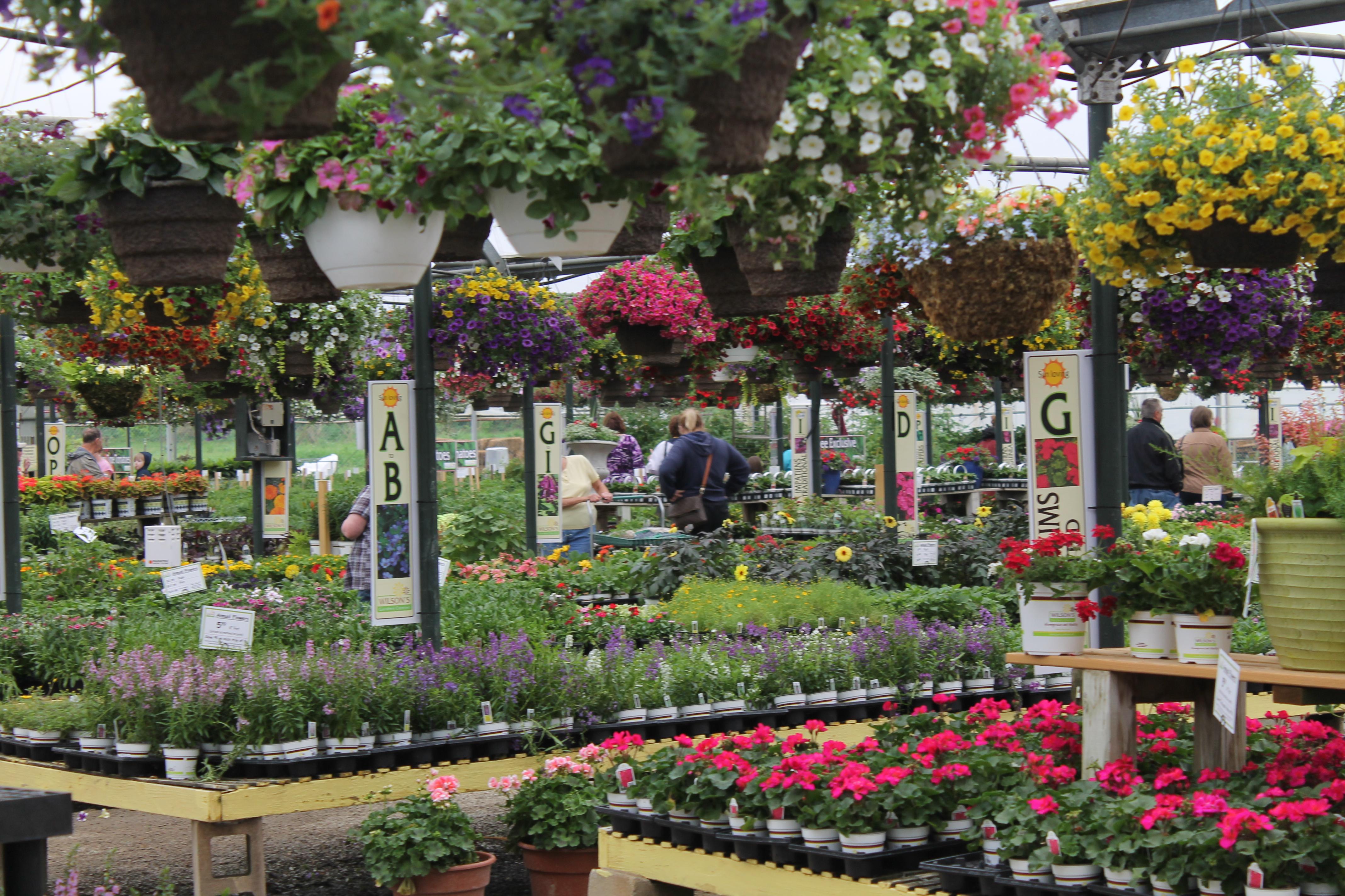 Annuals Wilson 39 S Garden Center