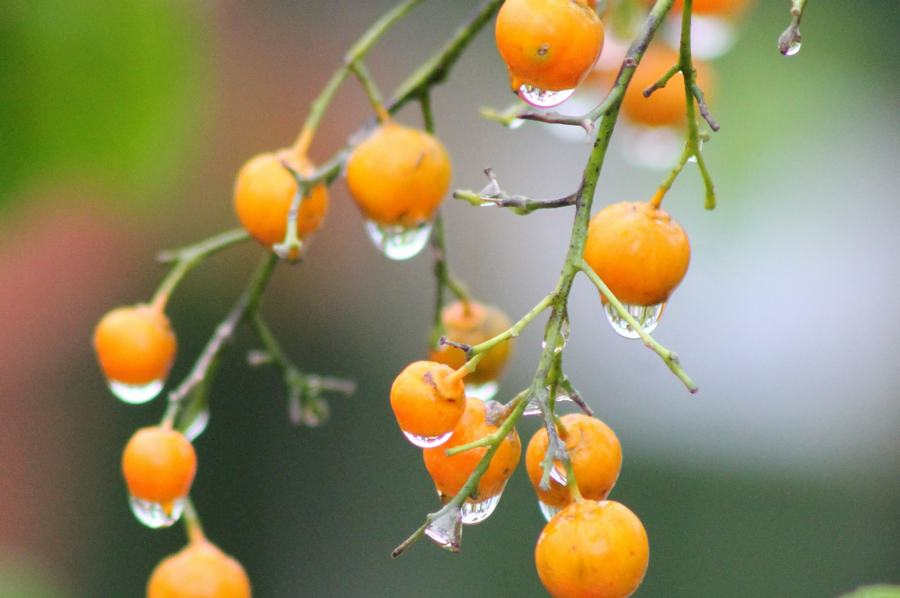 Plants That Attract Birds To The Garden