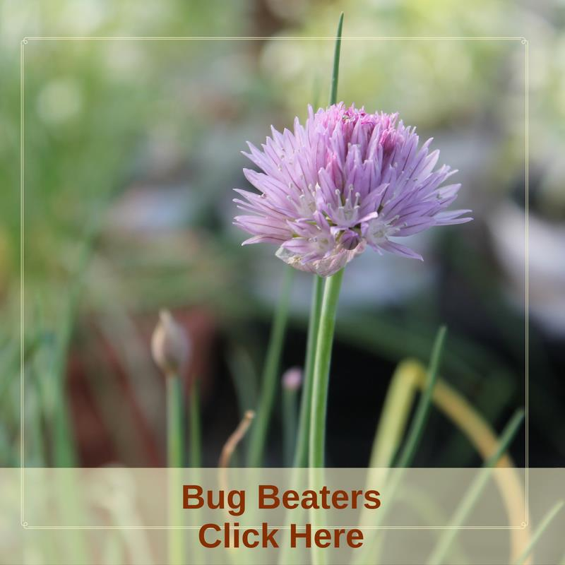 Bug Beaters