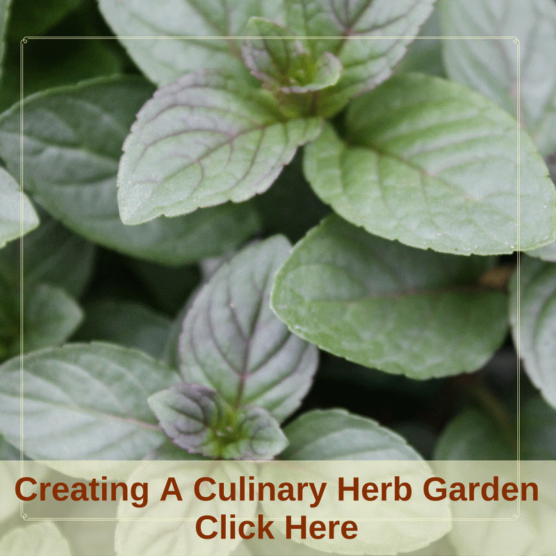 Creating A Culinary Herb Garden