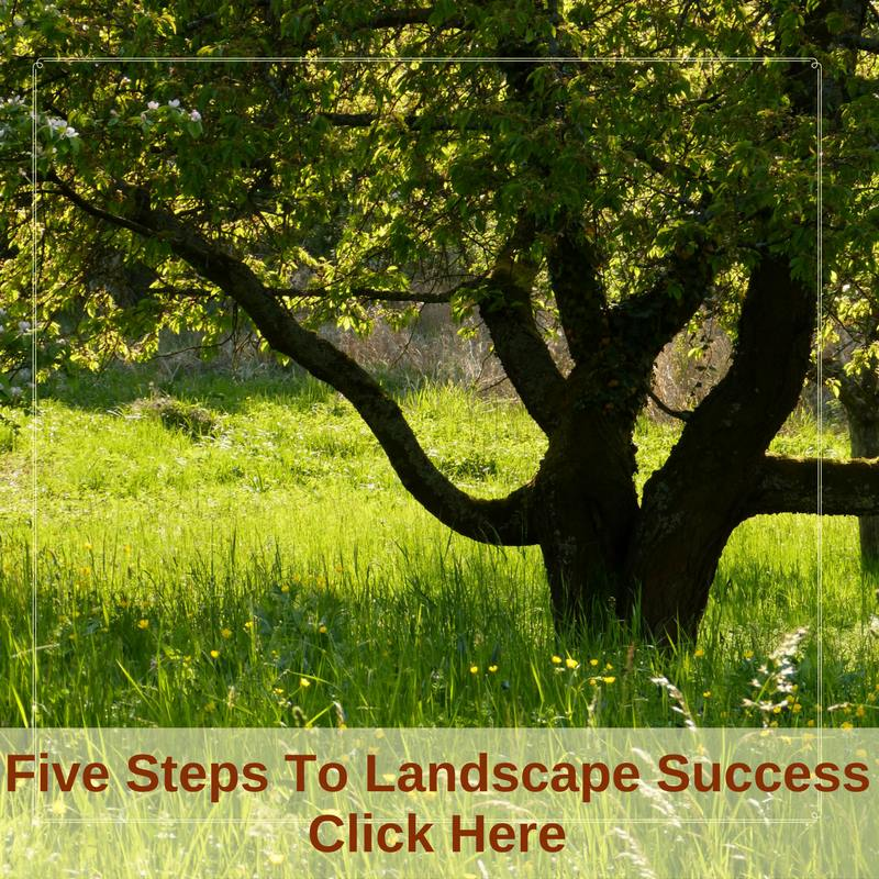 Five Steps To Landscaping Sucess