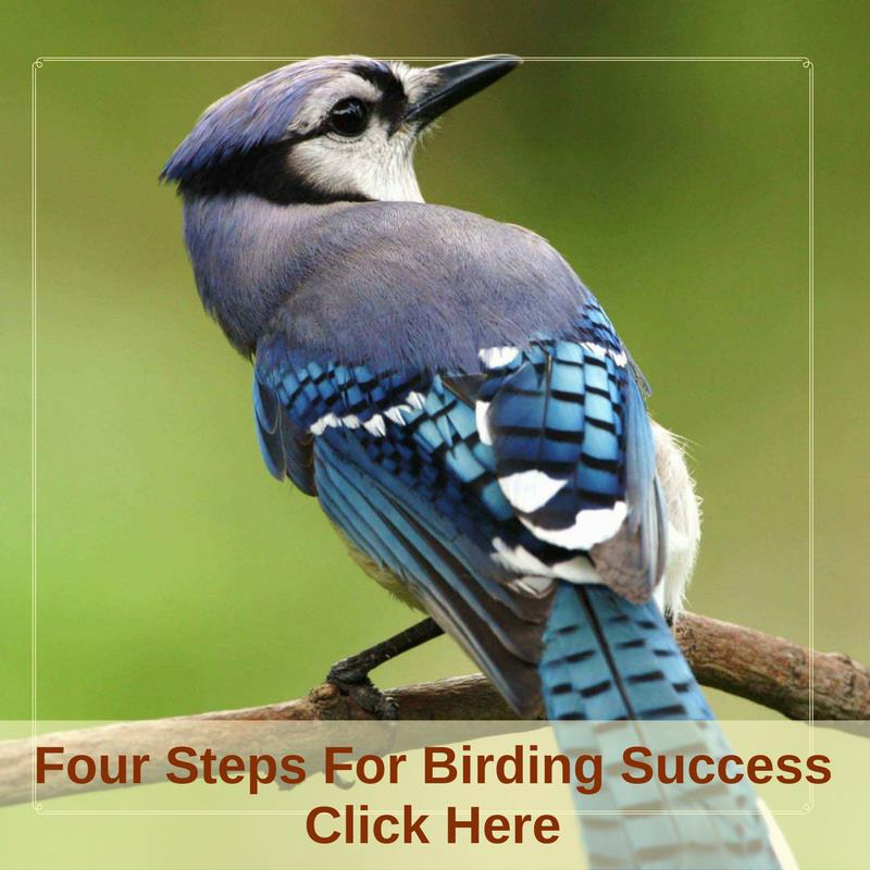 Four Steps To Birding Success