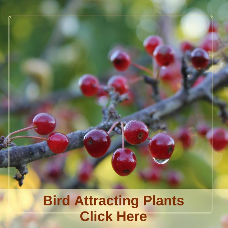 Bird Attracting Plants