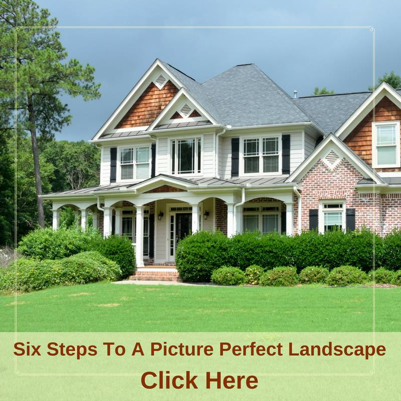 Six Steps To A Picture Perfect Landscape