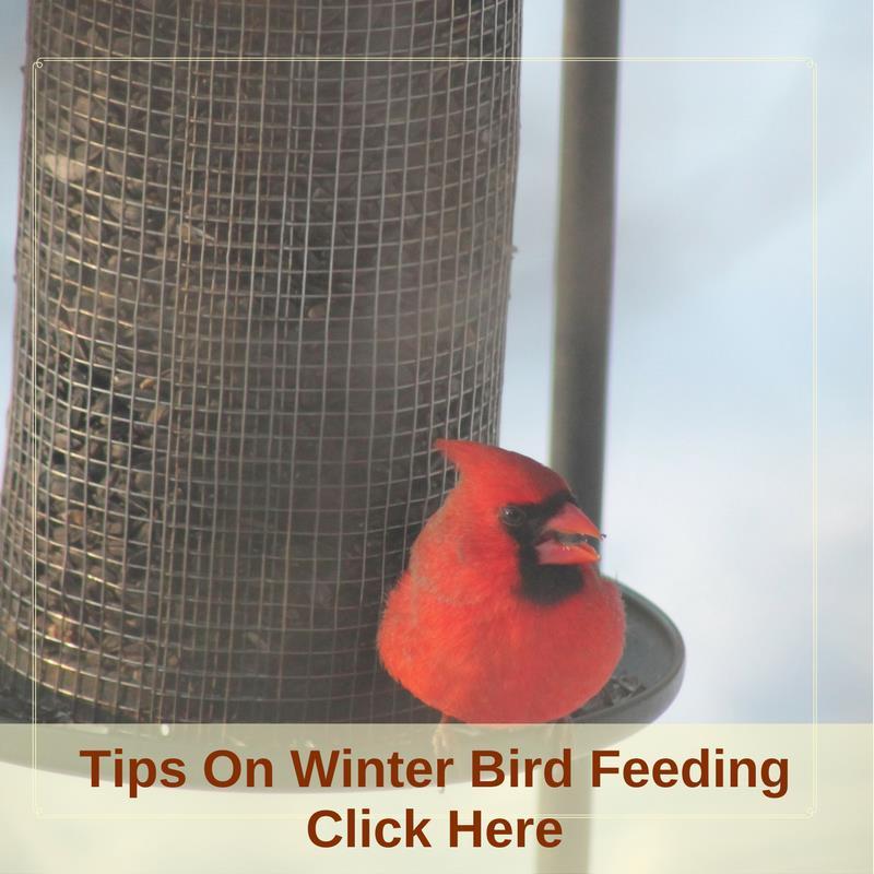 Tips On Winter Bird Feeding