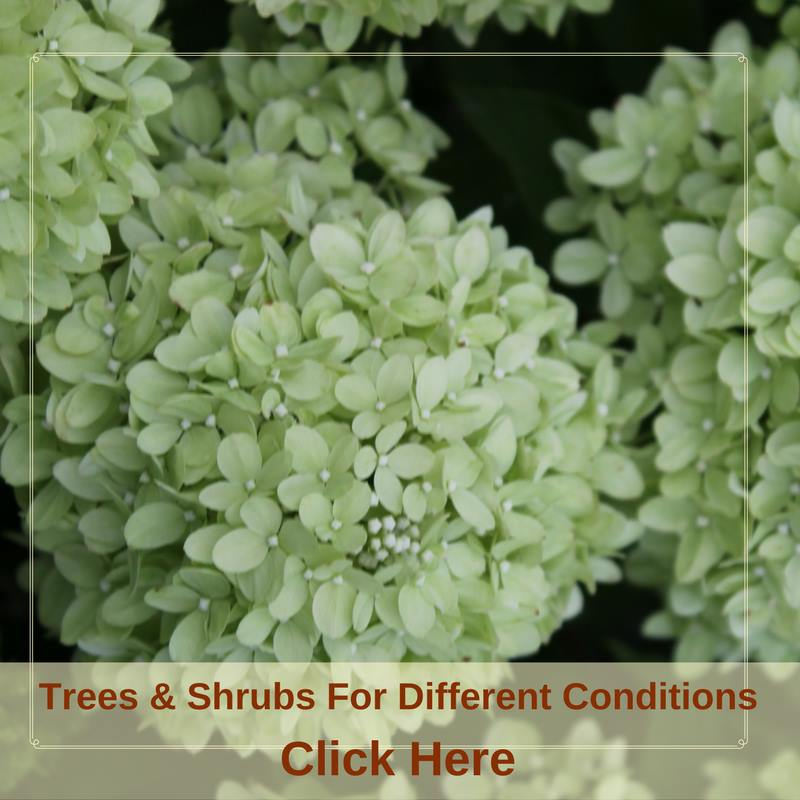 Trees & Shrubs For Different Conditions