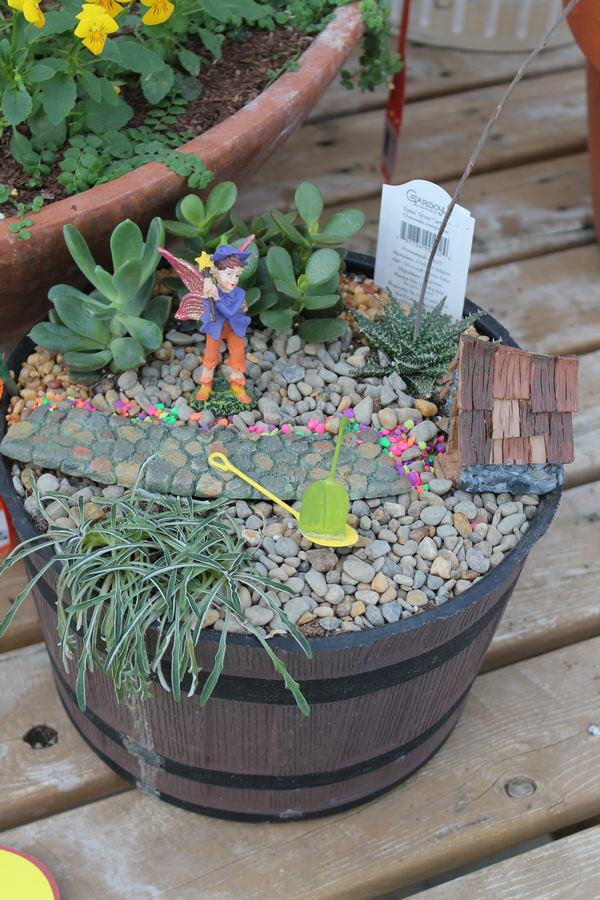Fairy Garden Wilsons Garden Center