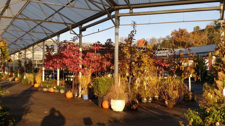 Fall In The Nursery