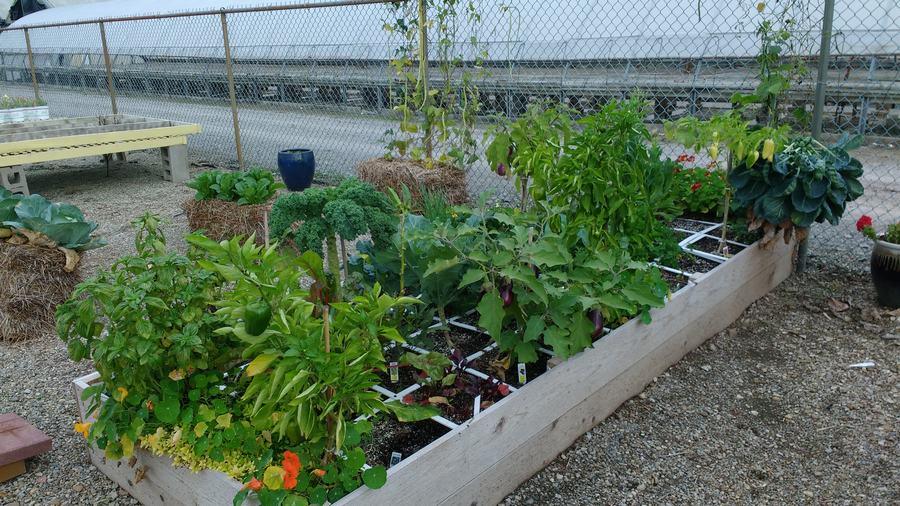 Raised bed gardening for Idea center dilshad garden