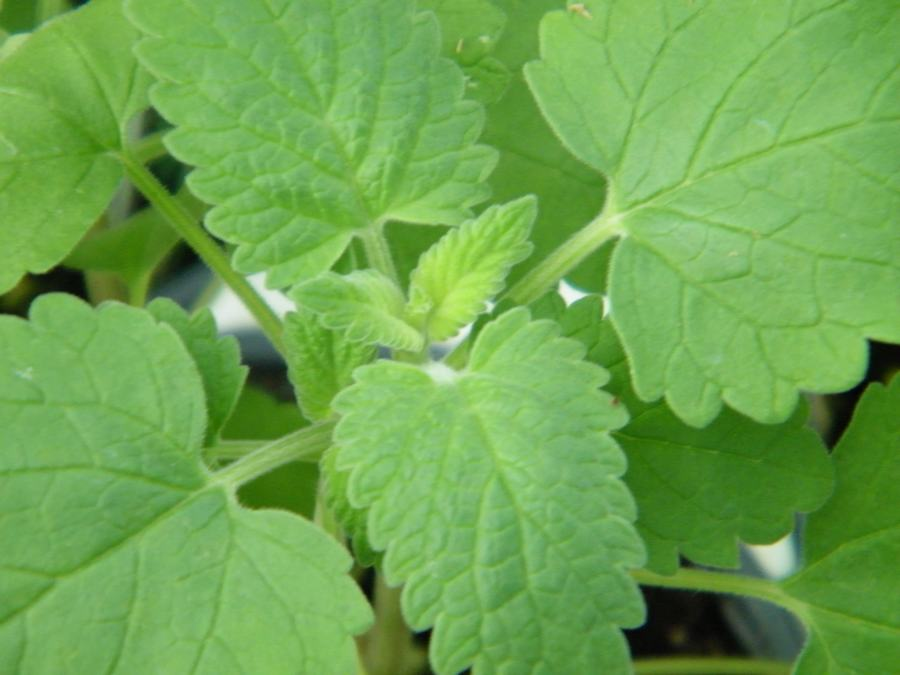 Herbs That Repel Bugs