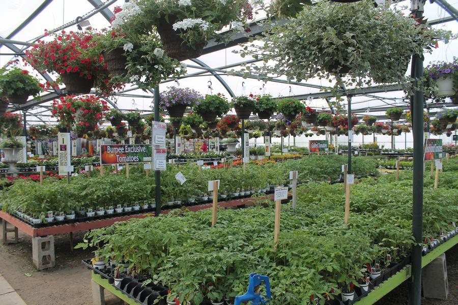 tomato department - Wilsons Garden Center