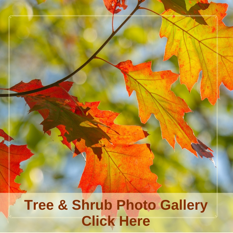 2018 Trees & Shrubs