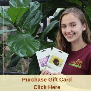 Purchase Gifts Cards Click Here